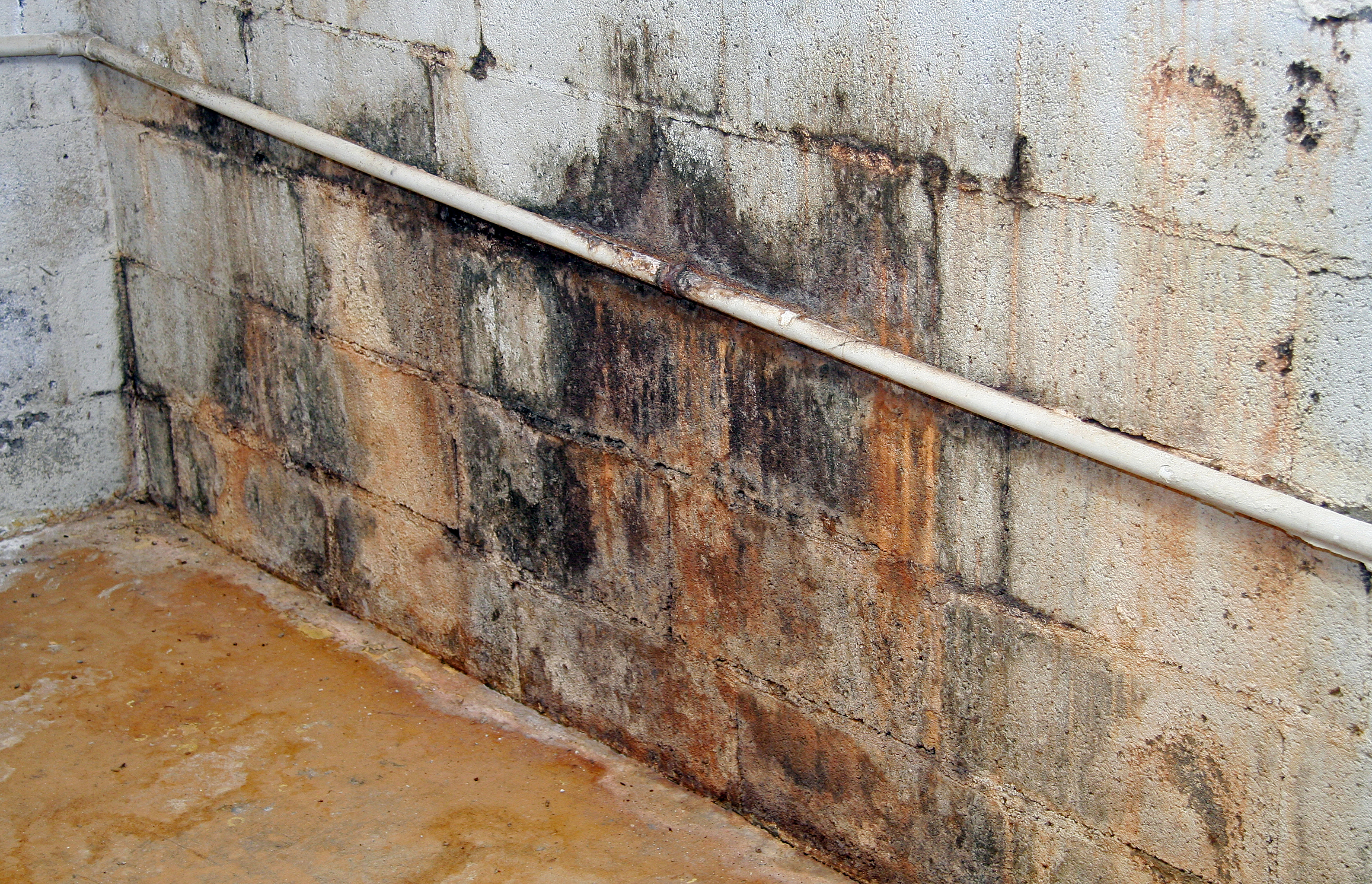 Black mold inspection cost - Mold Inspection
